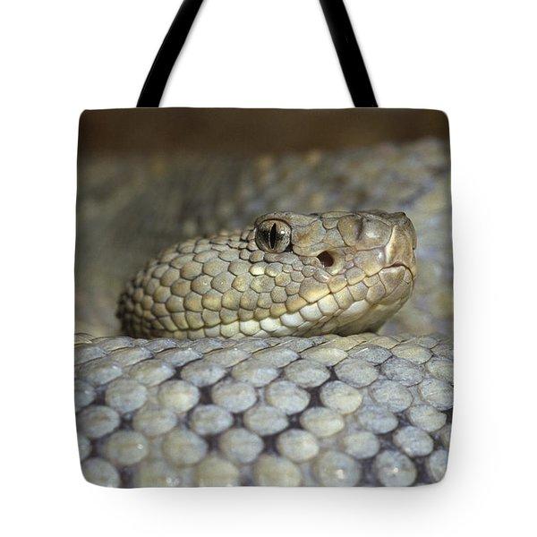 Aruba Rattlesnake Crotalus Unicolor Tote Bag by Gerry Ellis