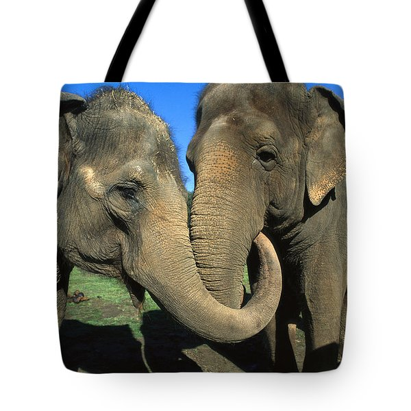 Asian Elephant Elephas Maximus Pair Tote Bag by Zssd