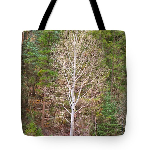 Aspen Tree Forest Road 249 Tote Bag