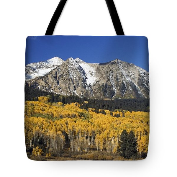 Aspen Trees In Autumn, Rocky Mountains Tote Bag by David Ponton