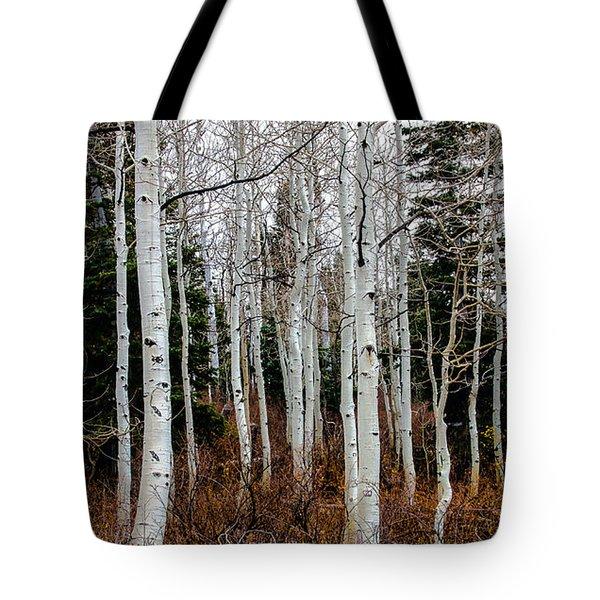 Aspens Tote Bag by Robert Bales