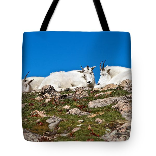 At Rest On The Tundra Tote Bag by Stephen  Johnson