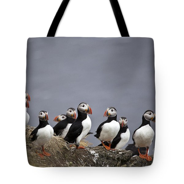 Atlantic Puffins On Cliff Edge Tote Bag by Greg Dimijian