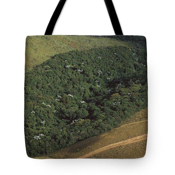 Atlantic Rainforest Remnant Brazil Tote Bag
