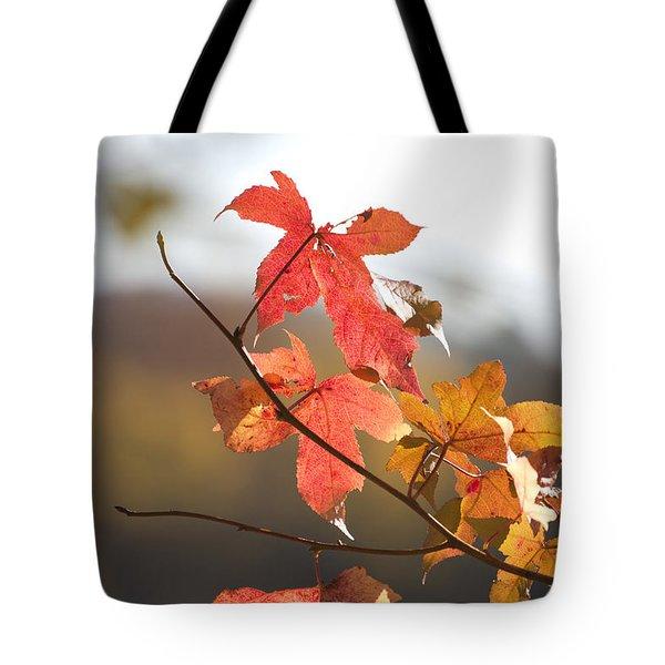 Autumn Colors-arkansas Tote Bag by Douglas Barnard