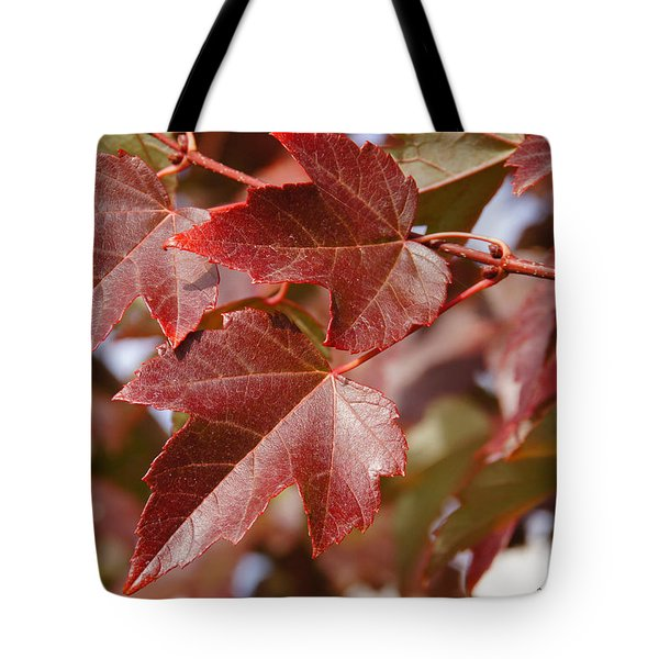 Autumn In My Back Yard Tote Bag by Mick Anderson