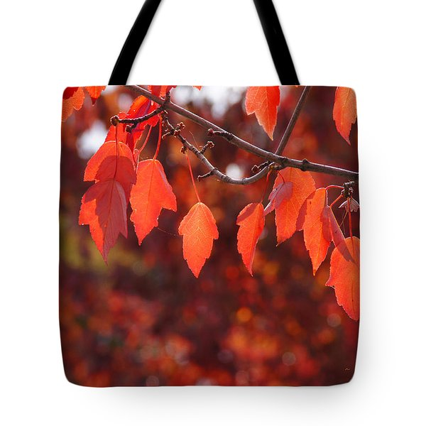 Autumn Leaves In Medford Tote Bag by Mick Anderson