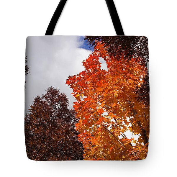Autumn Looking Up Tote Bag by Mick Anderson