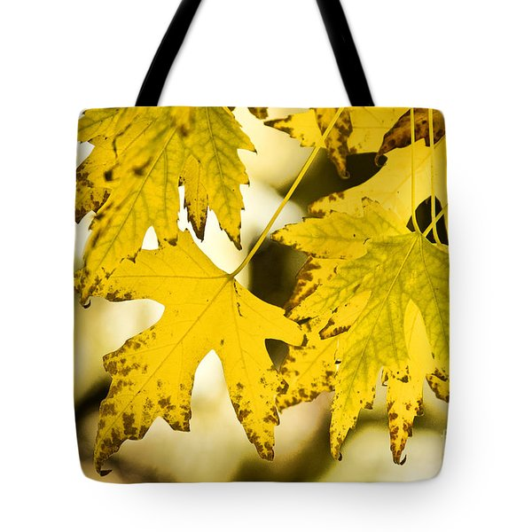 Autumn Maple Leaves Tote Bag by James BO  Insogna
