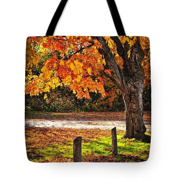 Autumn Maple Tree Near Road Tote Bag by Elena Elisseeva