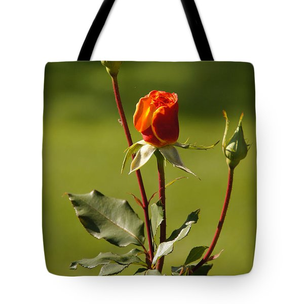 Autumn Rose Tote Bag by Mick Anderson