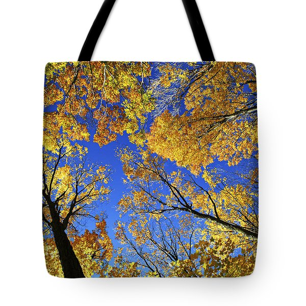 Autumn Treetops Tote Bag by Elena Elisseeva