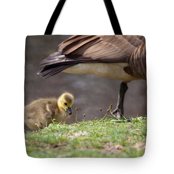 Baby Back Tote Bag by Karol Livote
