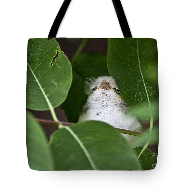 Baby Bird Peeping In The Bushes Tote Bag by Jeannette Hunt