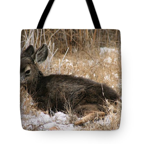 Tote Bag featuring the photograph Baby Deer At Rest by Nola Lee Kelsey