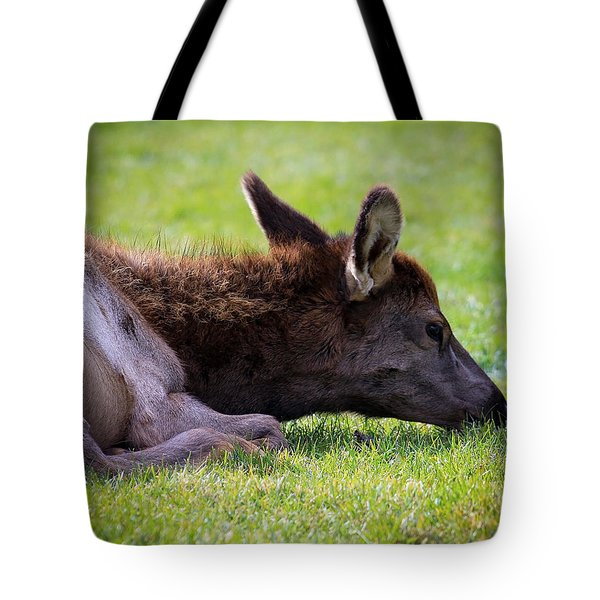 Tote Bag featuring the photograph Baby Elk by Steve McKinzie