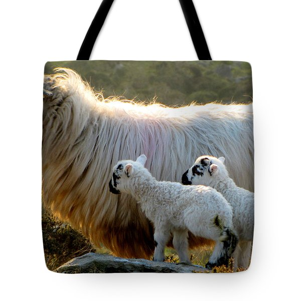 Baby-lambs Tote Bag by Barbara Walsh