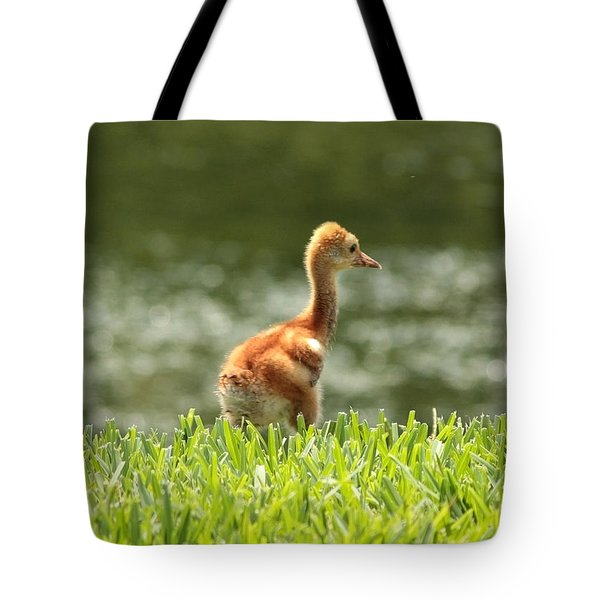 Baby Sandhill In The Sunshine Tote Bag by Carol Groenen