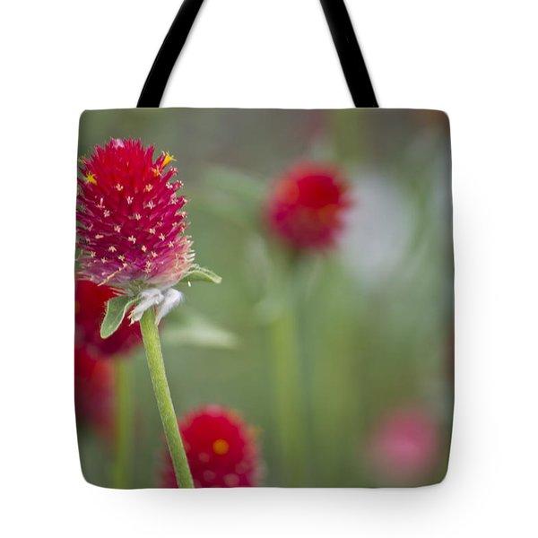 Bachelor's Button Tote Bag by Lisa Plymell