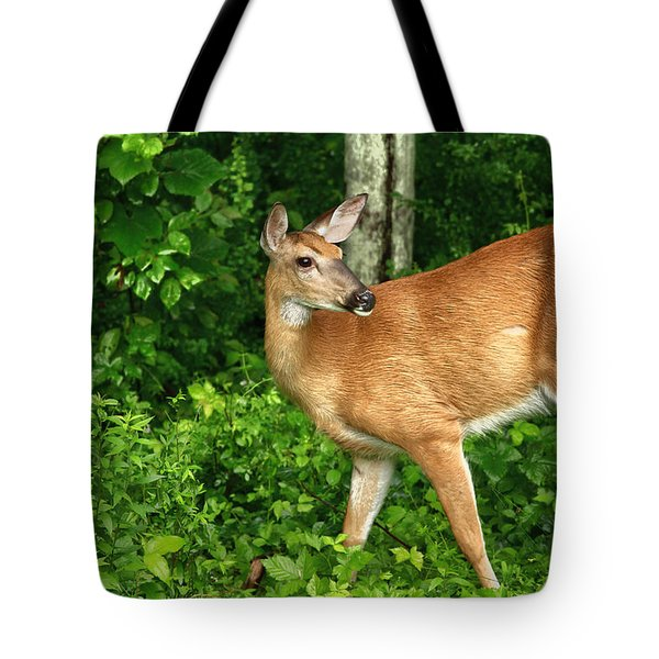 Backyard Doe Tote Bag by Karol Livote