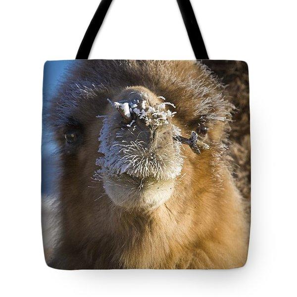 Bactrian Camel Camelus Bactrianus Tote Bag by David DuChemin