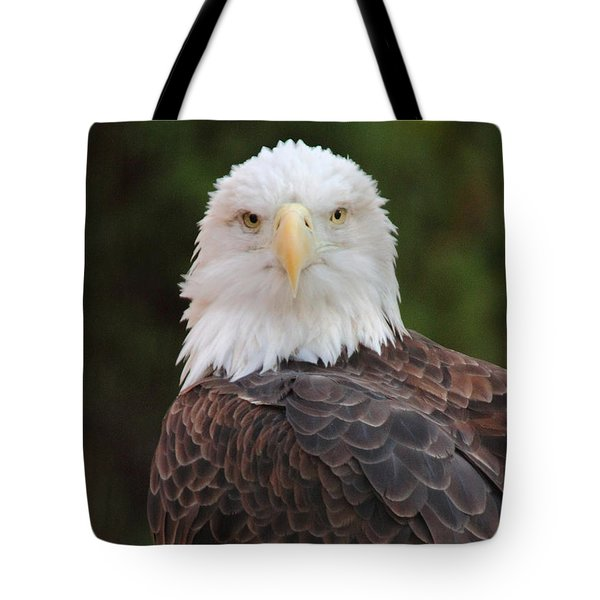 Tote Bag featuring the photograph Bald Eagle by Coby Cooper
