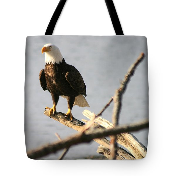 Bald Eagle On Driftwood Tote Bag by Kym Backland