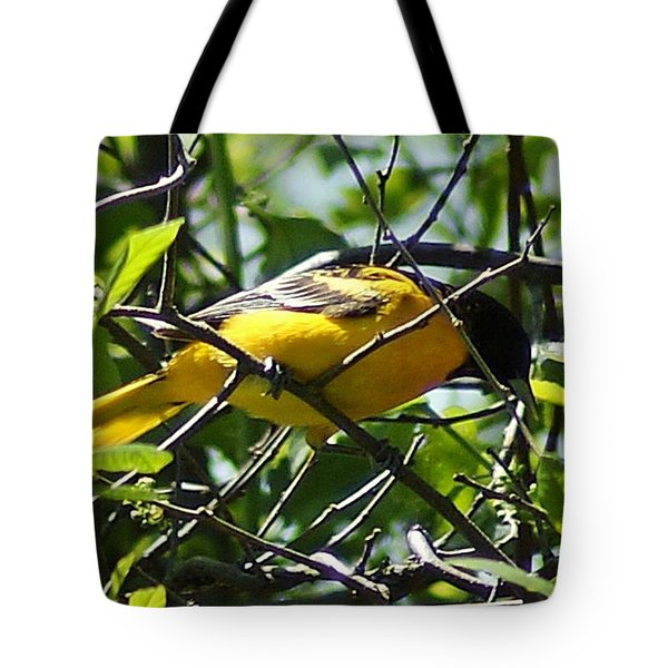 Baltimore Oriole Tote Bag by Joe Faherty
