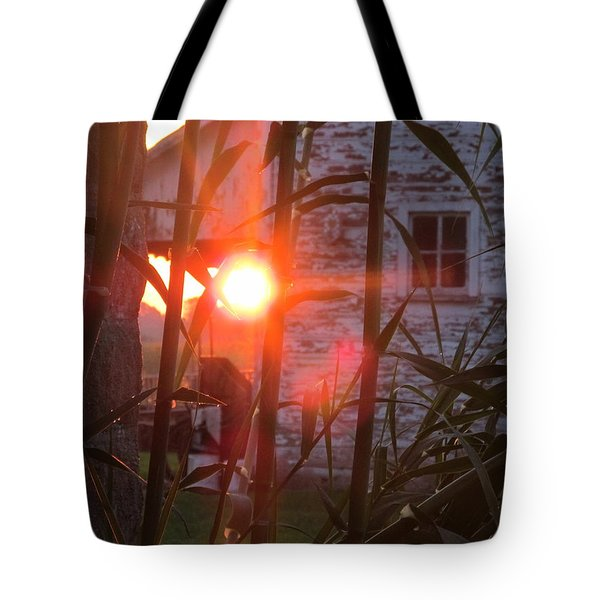 Tote Bag featuring the photograph Bamboo Sunrise by Tina M Wenger