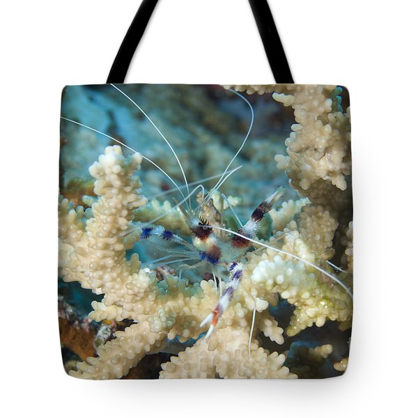 Banded Coral Shrimp Amongst Staghorn Tote Bag by Steve Jones