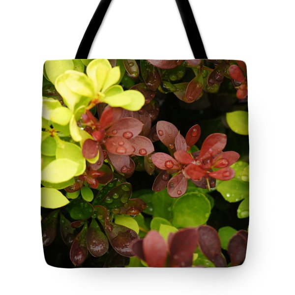 Barberry Conflict Tote Bag