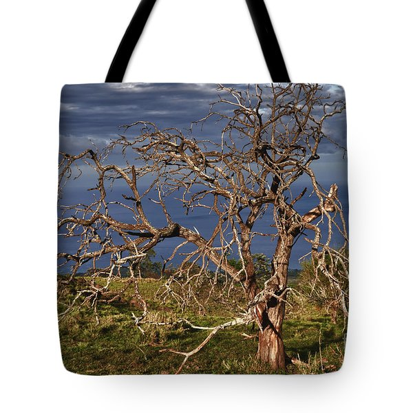 Bare Tree In Hana Maui Tote Bag