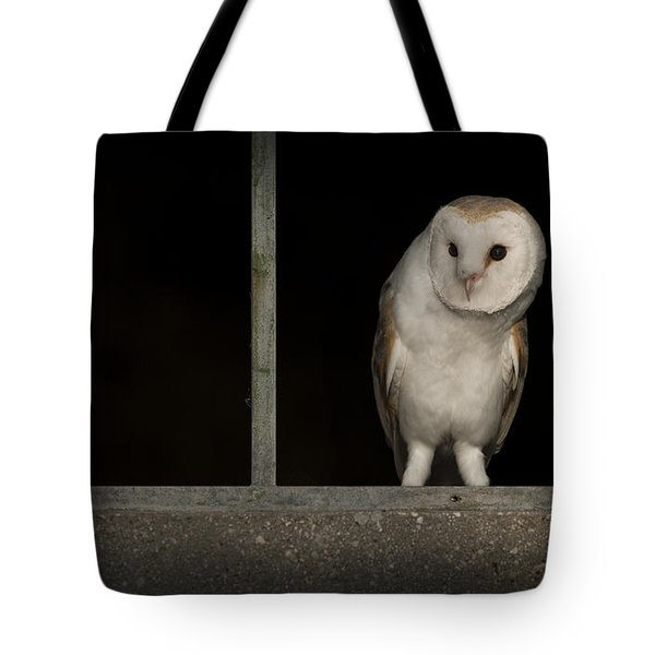 Barn Owl In Window Tote Bag