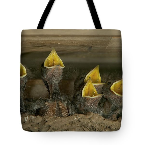 Barn Swallow Hirundo Rustica Chicks Tote Bag by Cyril Ruoso