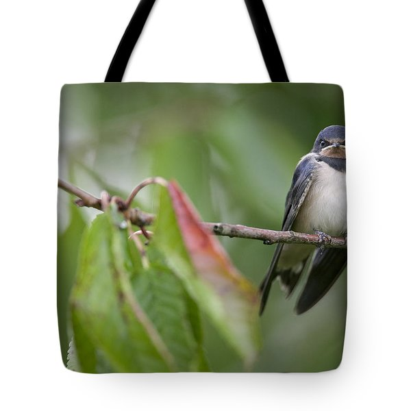 Barn Swallow Hirundo Rustica Fledgling Tote Bag by Cyril Ruoso