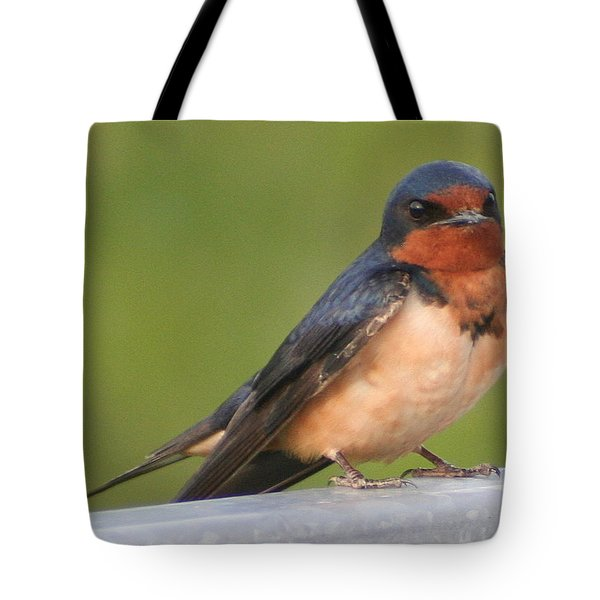 Barn Swallow Tote Bag by Laurel Talabere