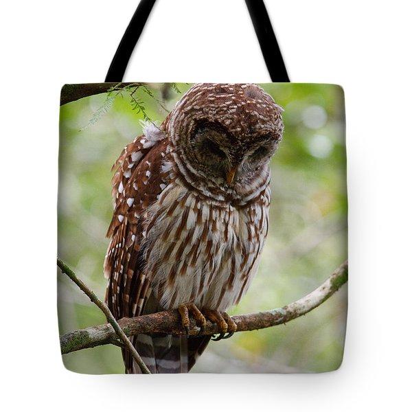 Barred Owl Tote Bag by Joe Elliott