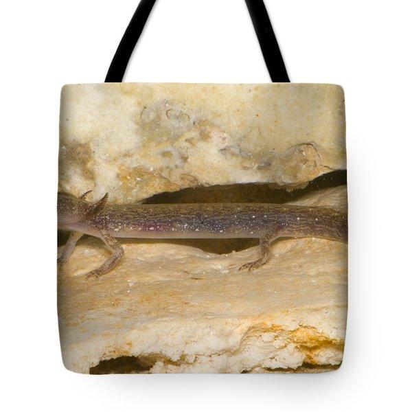 Barton Springs Salmander Tote Bag by Dante Fenolio