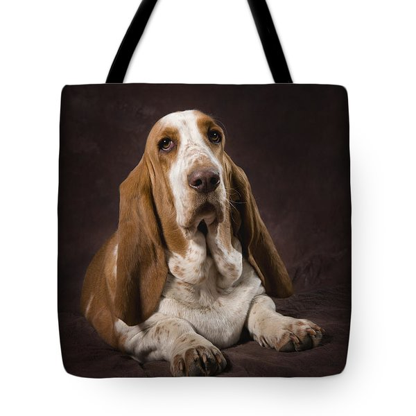 Basset Hound On A Brown Muslin Backdrop Tote Bag by Corey Hochachka