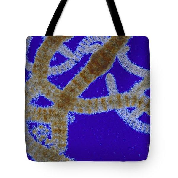 Batrachospermum Sp Algae Lm Tote Bag by M I Walker
