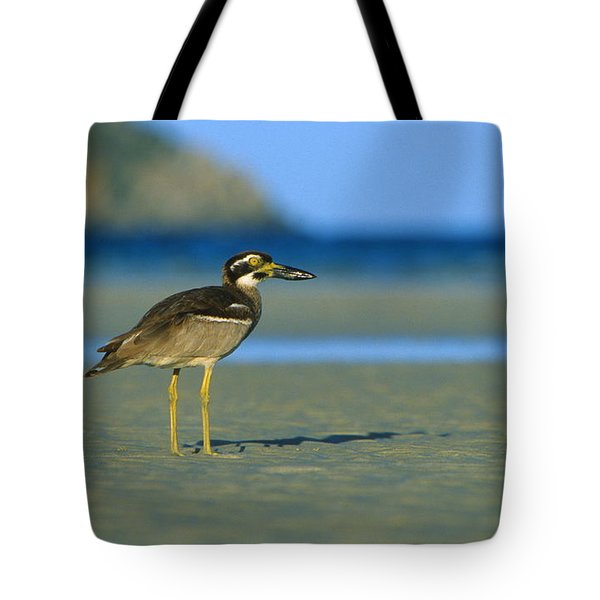Beach Stone-curlew Tote Bag by Bruce J Robinson