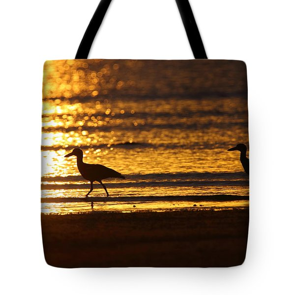 Beach Stone-curlews At Sunset Tote Bag by Bruce J Robinson