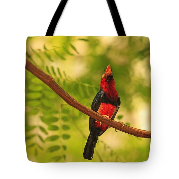 Bearded Barbet Tote Bag by Stuart Westmorland