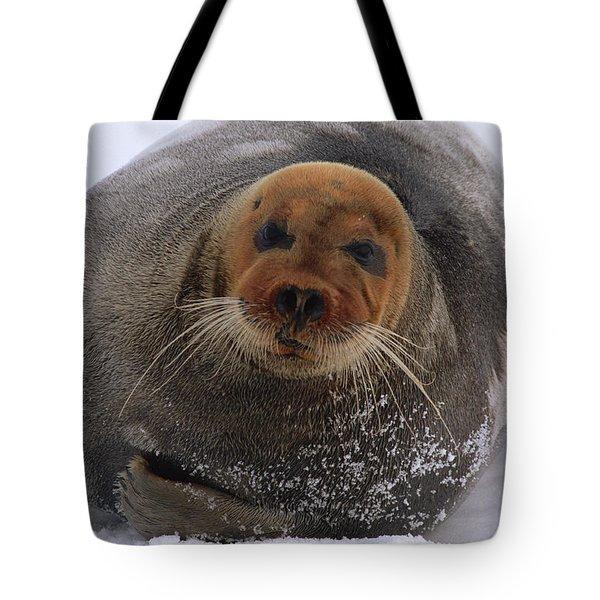 Bearded Seal Erignathus Barbatus Adult Tote Bag by Flip  Nicklin