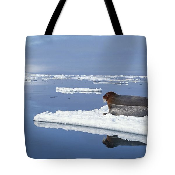 Bearded Seal Resting On Ice Floe Norway Tote Bag by Flip Nicklin