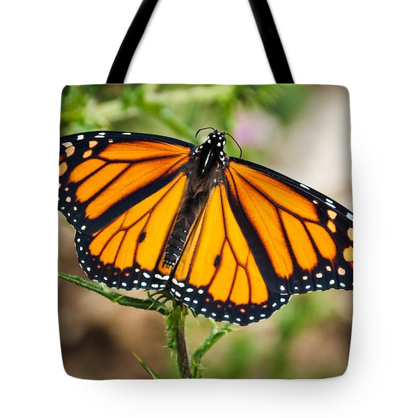 Tote Bag featuring the photograph Beautiful Boy by Cheryl Baxter