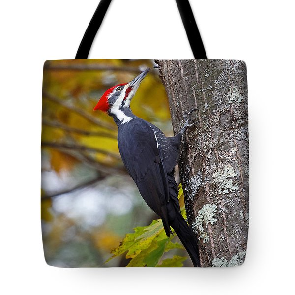 Beautiful Pileated Woodpecker Tote Bag