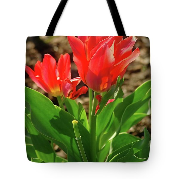Tote Bag featuring the photograph Beauty In Red by Dariusz Gudowicz