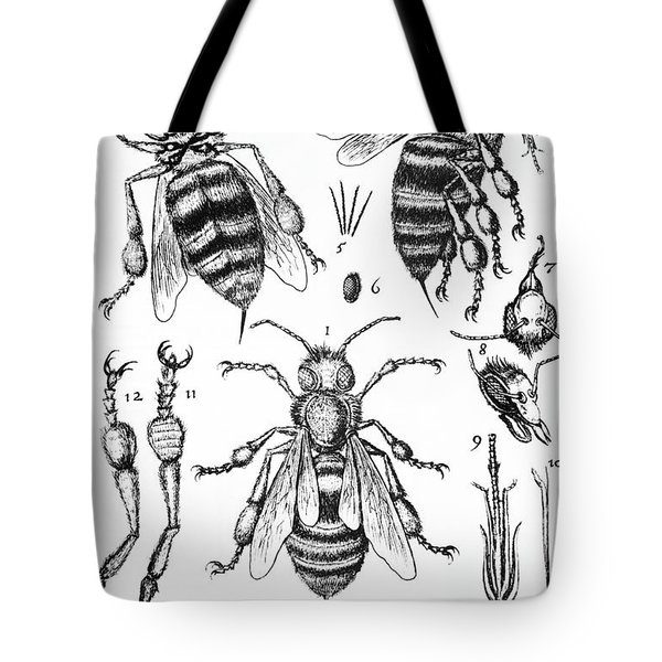 Bee Anatomy Historical Illustration Tote Bag by SPL and Photo Researchers