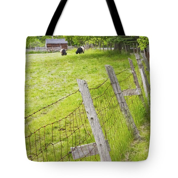 Belted Galloway Cows Farm Rockport Maine Tote Bag by Keith Webber Jr